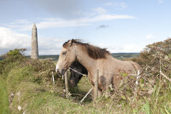 Two grazing Irish horses and ancient round tower Royalty Free Stock Image