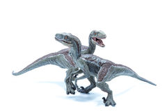 Two great Velociraptor dinosaurs toy crossing each other isolate Royalty Free Stock Images