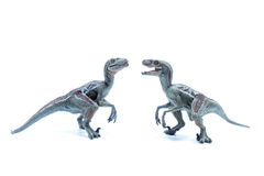 Two great Velociraptor dinosaurs toy facing each other  Royalty Free Stock Photos