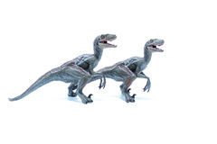 Two great Velociraptor dinosaurs toy side by side  on wh Royalty Free Stock Images