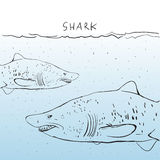 Two Great White Shark in the water. Sketch. Black outline on a b Stock Image