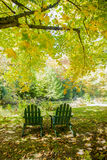 Two Green Adirondack Chairs Under A Maple Tree Stock Images