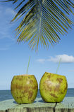 Two Green Coconuts Palm Tree Tropical Sea. Two green drinking coconuts stand on rustic wood table against a backdrop of blue sea and palm fronds on an empty Stock Photography