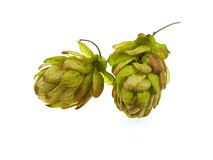 Two green cones of hop Stock Photo