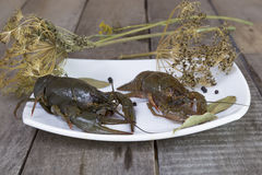 Two green crayfish on the square plate Stock Image