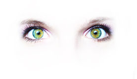 Two green eyes. A pair of green eyes on white background