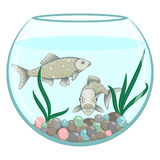 Two green fishes in the round aquarium. Full face and side view of marine animal. Cartoon stile Stock Photo