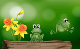 Free Two Green Frogs On The Log Royalty Free Stock Image - 83439196