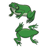 Two green frogs Royalty Free Stock Photo