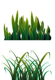 Two Green Grass. Vector Illustration Royalty Free Stock Photo