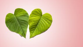 Two Green Hearts in Gradated Pink Background stock image