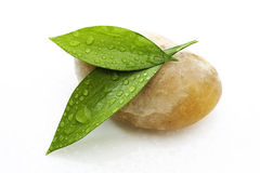 Two green leafs on yellow stone Stock Photography