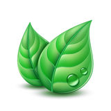 Two green leaves Royalty Free Stock Images