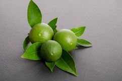 Two green limes with leaves on gray background Royalty Free Stock Photo