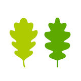 Two green oak leaves. Set Stock Photos
