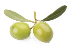 Two green olives on branch Stock Photo