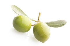 Two green olives on branch Stock Image