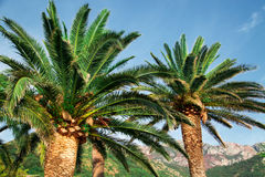 Two green palms near mountain at summer daytime Stock Photo