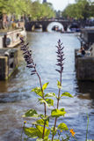 Two green plants near the canal with a boat in the day in Amsterdam Royalty Free Stock Photos
