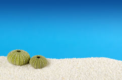 Two green sea urchin shells, white sand, blue background. Two green sea urchin shells on white sand with blue background. Urchins, also sea hedgehogs, with Royalty Free Stock Photos