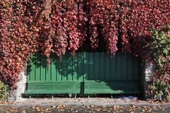 Two green stand with red autumn leafs Stock Photo