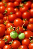 Two green tomatoes on many red tomatoes Royalty Free Stock Photos