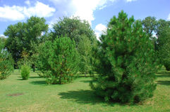Two green trees in the foreground Stock Photos
