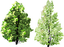 Two  green trees illustration Stock Photo