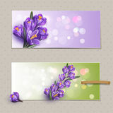 Two greeting cards for the holiday, with blue crocuses Royalty Free Stock Photo