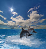 Two grey dolphins jumping above blue sea. Two grey dolphins jumping above blue water Stock Images