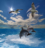 Two grey dolphins and two gulls in sea. Two grey dolphins and two gulls in blue sea Stock Photography