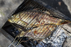 Two grilled carp on bbq fireplace Royalty Free Stock Images