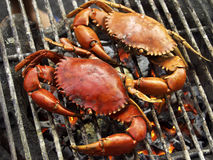 Two grilled crabs. Royalty Free Stock Image