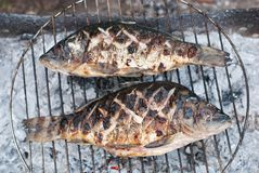 Two grilled European carps on barbecue Stock Photo