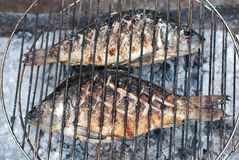 Two Grilled European Carps On Barbecue Stock Photos