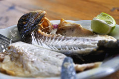 Two grilled fish Royalty Free Stock Photo
