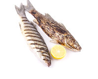 Two grilled fish on white. Royalty Free Stock Photography