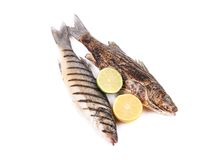 Two grilled seabass. Stock Image