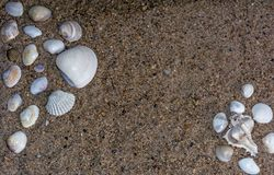 Two Group Of Seashells On Sand. royalty free stock photography