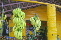 Two Groupd of Bananas Hanging in a Shop. Two groups of bananas hanging in a fruit and flower shop in Cabaret, Dominican Republic with a bright yellow post Royalty Free Stock Images