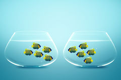 Two groups of angelfish in fishbowls. Looking to each other Royalty Free Stock Photo