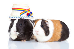Two guinea pigs with a romanian Royalty Free Stock Images