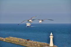 Two gulls at lighthouse Royalty Free Stock Photo