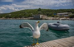 Two gulls in the sea, one guarding the stern of the yacht stock image