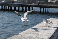 Two gulls on a sea quay Royalty Free Stock Image
