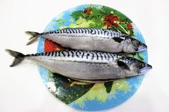 Two gutted mackerel lie on a colored dish. Prepared for pickling royalty free stock image
