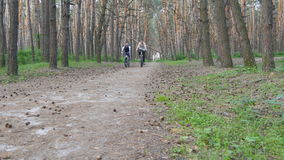 Two guys riding a bike on pathway in forest and talking. Mountain bikers passing by the camera in a green woods. Active stock video