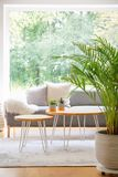Two hairpin tables with cactus standing on carpet in bright daily room interior with fresh plant, window and grey sofa in the real. Photo stock photos