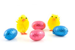 Two hairy chicks with easter egg Stock Photos