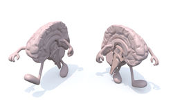 Two half brains that walk Stock Photo